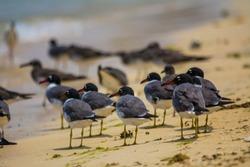 Sea birds in seashore, red sea, jeddah - saudi arabia