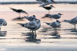 Sea birds on the Florida shores of Cape Canaveral.