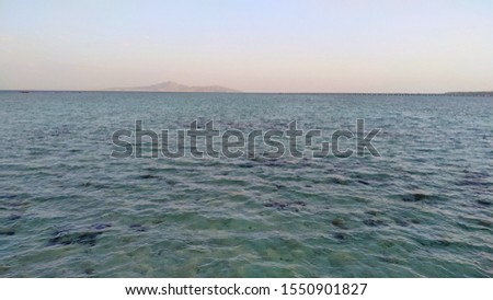 Sea bottom of the Red Sea with corals and sea urchins, Egypt