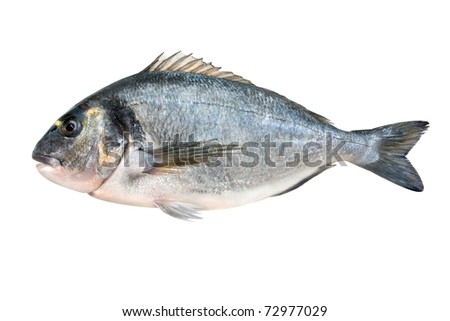 sea bream gilt-head isolated on white