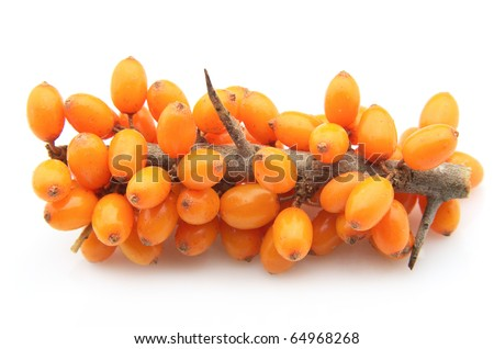 Sea-buckthorn berries branch on a white background