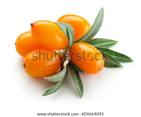 Sea buckthorn. Fresh ripe berries with leaves isolated on white background. #604664045