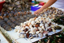 Sea clams on traditional seafood market on Boracay island in Philippines