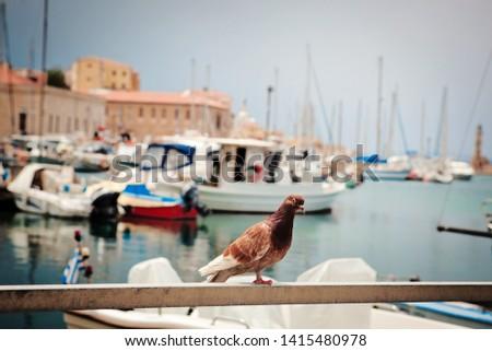 Sea Coast Dove Bird Port