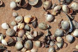 Sea coast with beautiful seashells