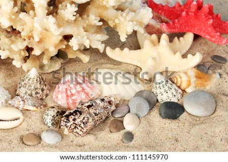 Sea coral with shells close-up