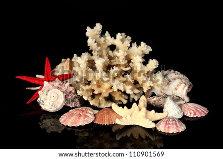 Sea coral with shells isolated on black
