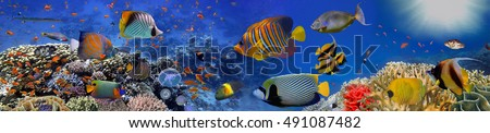 Sea corals. Panorama. Red Sea, Egypt #491087482