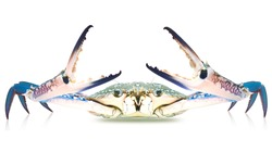 Sea crab raw isolated on white background