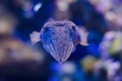 sea creatures exhibited in the Oceanographic Museum of Monaco