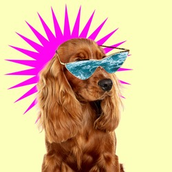 Sea dream. Modern design. Contemporary art collage with cute dog and trendy colored background with geometric styled elements. Inspirative art, pets, animal, style and fashion concept. Copyspace.