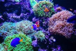 sea fish and corals