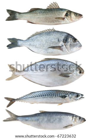 Sea fish collection isolated on white background