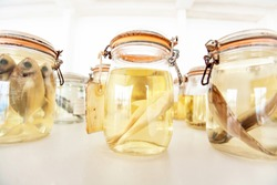 Sea fish specimens preserved in glass jars, sea fish specimens preserved in glass jars of formalin in museum shelves. Jarred animals in a scientific collection of ichthyology museum.