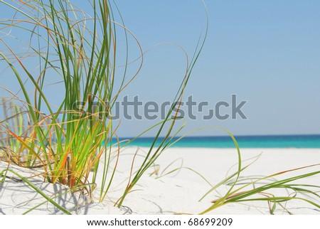 Sea grass on white sand in Pensacola, Florida
