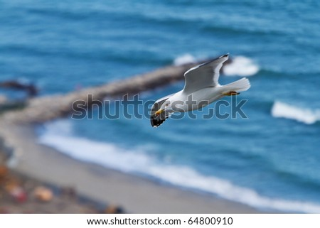sea gull above surf