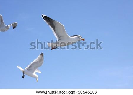 Sea gull flying over ocean