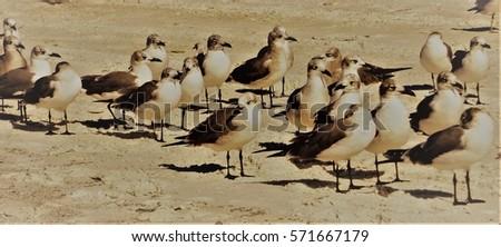 Sea Gull Gathering #571667179