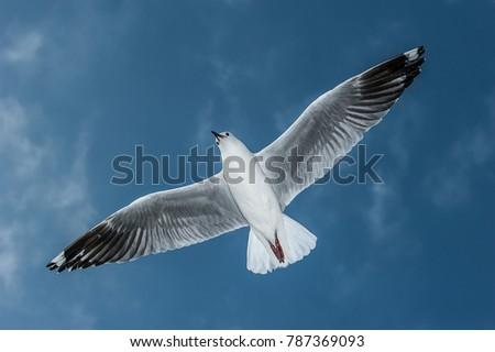 Sea-gull in flight #787369093