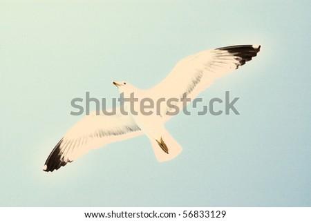 Sea gull in flight on a blue sky