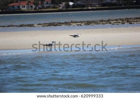 Sea Gull on sandbar