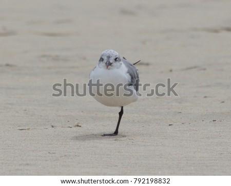 Sea Gull Staring #792198832