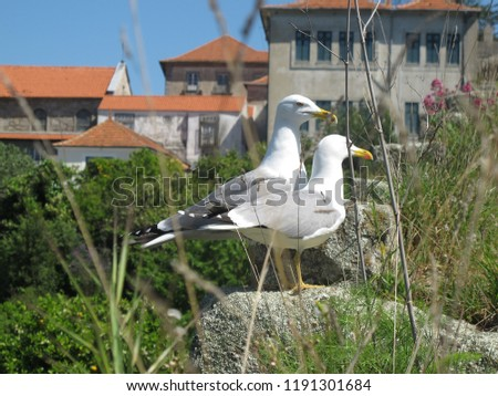 sea gull, twin sea gull, sea gull with grass, sea gull in the town, birds #1191301684