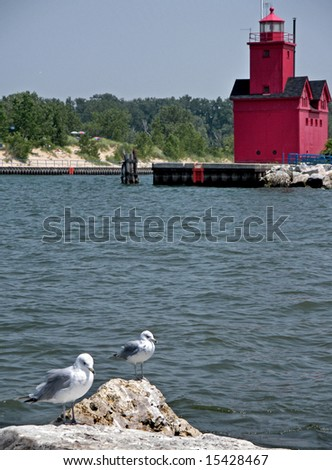 sea gulls and lighthouse in the harbor