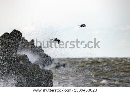Sea gulls and stormy sea.