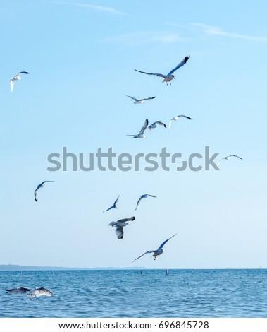 sea gulls  fly over lake Michigan in the USA #696845728