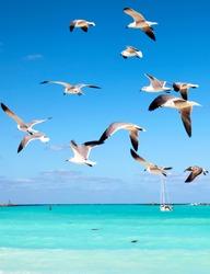 Sea gulls fly over the sea, cutting through a beautiful blue sky