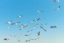 Sea gulls flying in blue sky