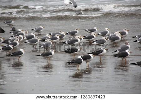 Sea gulls on the beach #1260697423