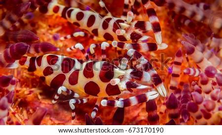Sea Horse Underwater photography