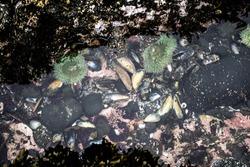 Sea life in a tide pool