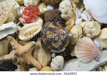 Sea life potpourri - closeup