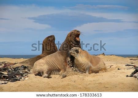 Sea Lion Stock fotó ©