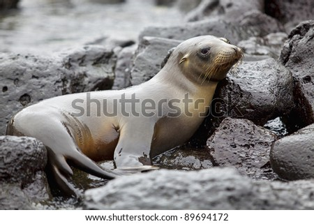 Sea lion colony on Santa Fe island, Galapagos - stock photo