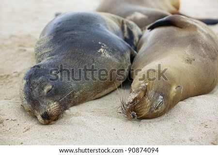 Sea lion colony on Santa Fe island, Galapagos