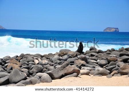 Sea lion on rocks Galapagos Islands