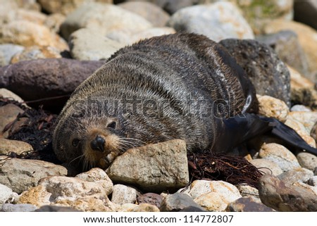 Sea lion on the rocky beach