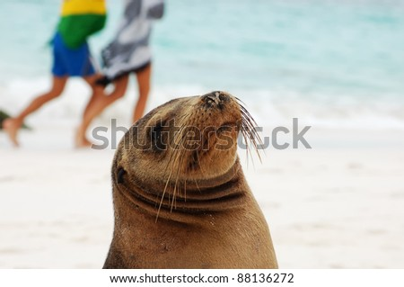 Sea Lion portrait, Galapagos.