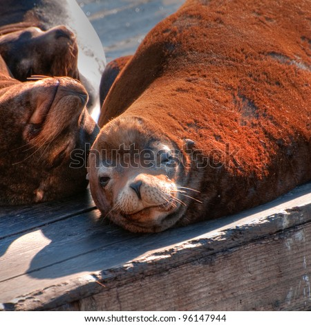 Sea Lions Basking in the Sun