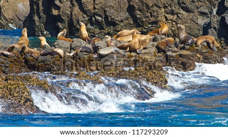 Sea lions, Channel Islands National Park, California, USA
