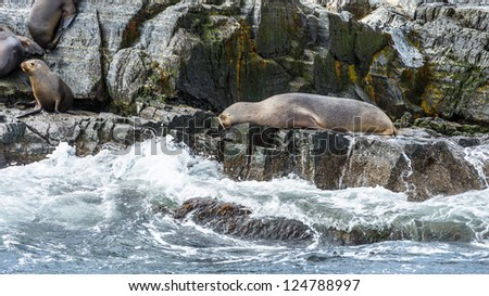 Sea lions over the rock of the  the Beagle Channel, a strait in the archipelago island chain of Tierra del Fuego on the extreme southern tip of South America partly in Chile and partly in Argentina