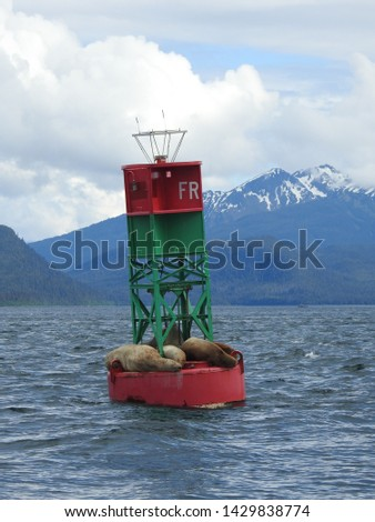 Sea Lions Sea Potatoes Wildlife