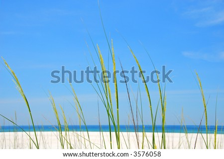 Sea Oats at Shore Suitable for Background