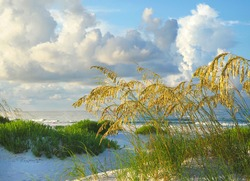 Sea Oats Lit by the Golden Morning Sun on a Beautiful White Sand Beach of the Florida Gulf Coast