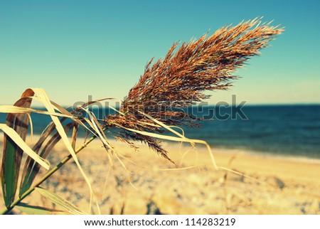 sea oats retro procesed