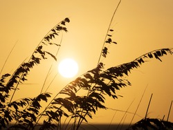 Sea Oats silhouetted by orange sky and sun on Sanibel Island on the Gulf coast of Florida in the United States